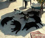 blog śmieszne koty: duże koty duze koty