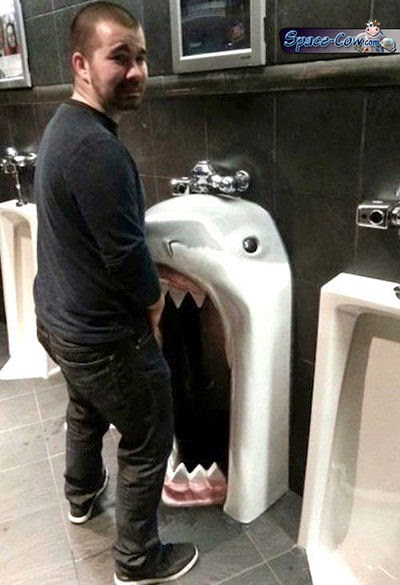 funny things shark picture