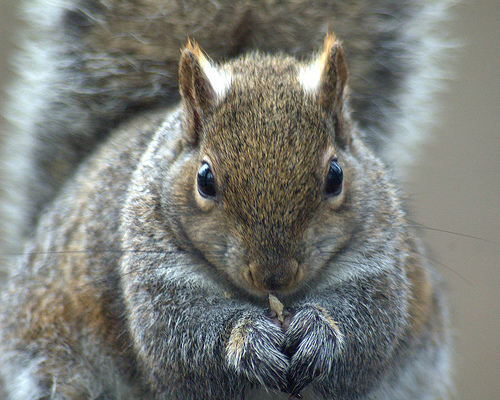 Squirrel Pest Control Guide FOR BEGINNERS: General Types of Squirrels