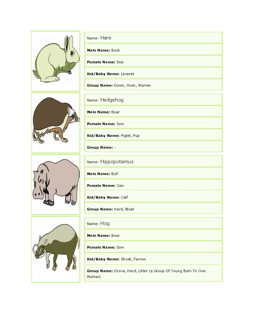 General English For All World Of ANIMALs Picturesque
