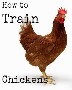 How to Train Chickens