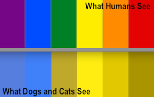Dogs color blindness