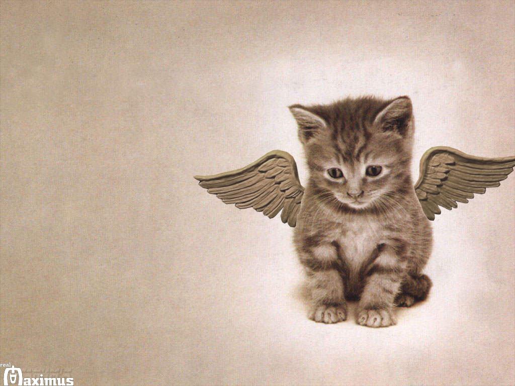 http://4.bp.blogspot.com/-xc2yVWscpUo/T65vFxbl1qI/AAAAAAAAAK4/05OdvhafLY8/s1600/cats+wallpaper+1.jpg