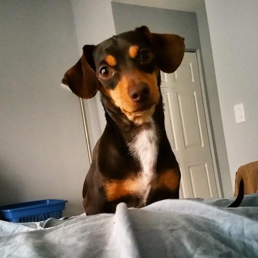 Sunday-Morning-with-Monty-tasteasyougo.com
