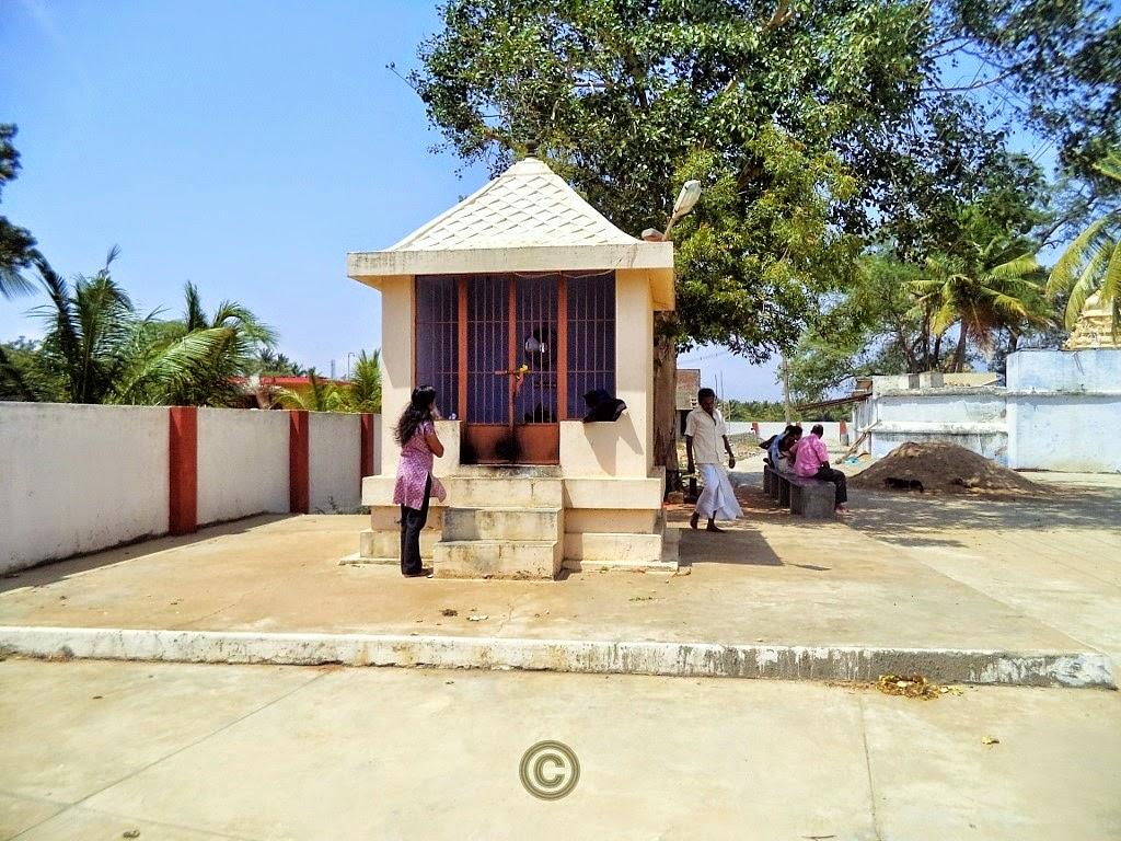 A South Indian Tamil Girl / Woman praying in Theneeswarar temple, Vellalore, Coimbatore. , Temple Vellalore Coimbatore, Vellalore; Coimbatore; India; Hindu; God; Hindu God; Temple; Theneeswarar Temple; Shiv; Shiva; Lord Shiva; Siva perumaan; eeshwar;