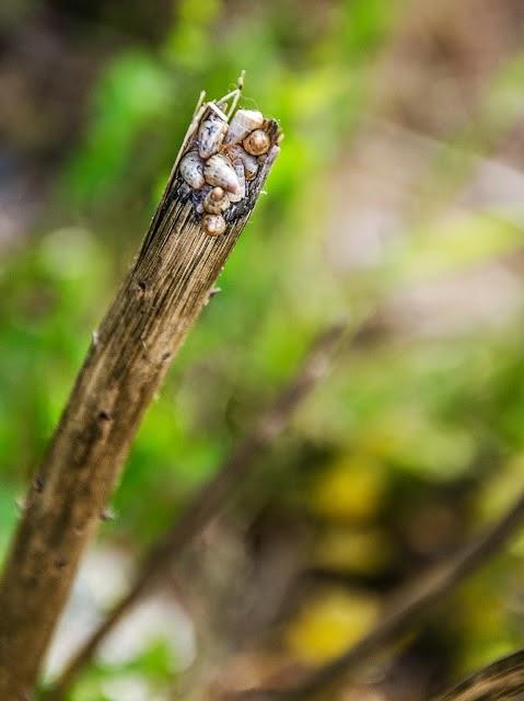 natura http://www.fotografiashiphop.com cadiz