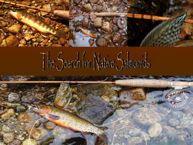 The Search for Native Salmonids