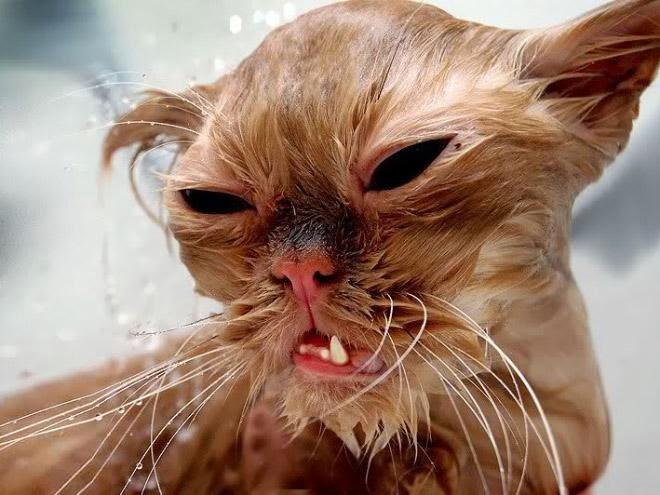 10 Gambar Yang Membuktikan Kucing Takut Mandi ...