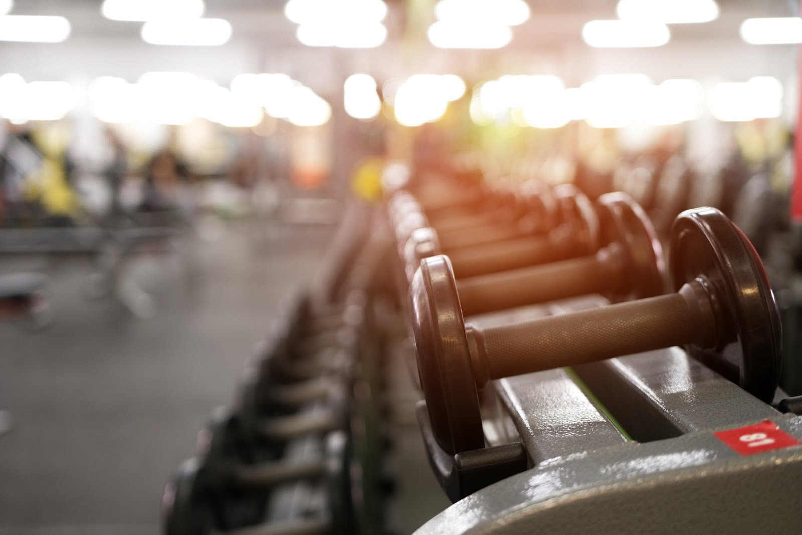 Exercising: Gym & Fitness