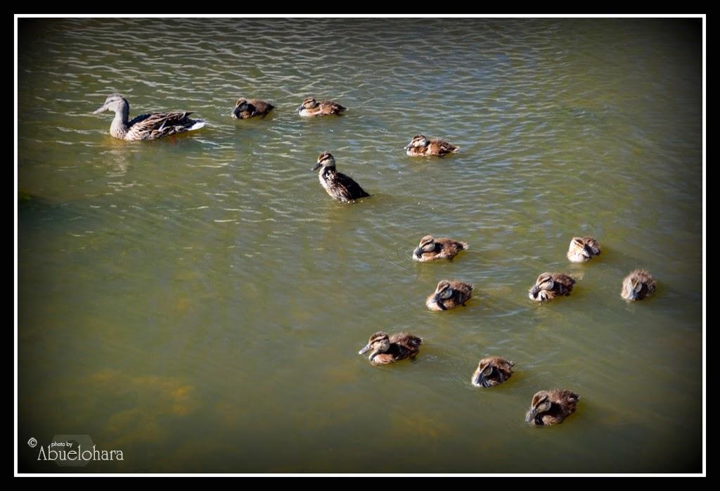 Parque Lineal Arroyo Culebro. #Leganés