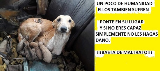 maria.fernandez.parrilla.animalista DIFUSION DE ANIMALES SIN HOGAR