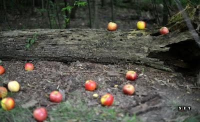 новости турина эдемский лес