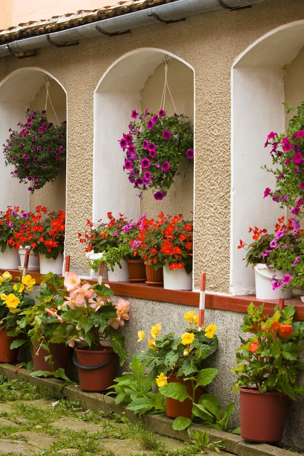 Banco de im genes plantas y flores en el jard n de la - Plantas para jardin ...