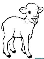 mewarnai gambar anak kambing