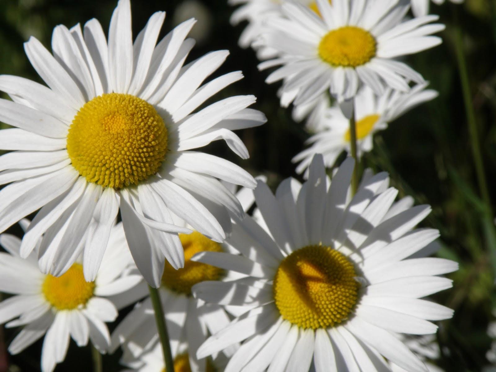 svenska blommor lista