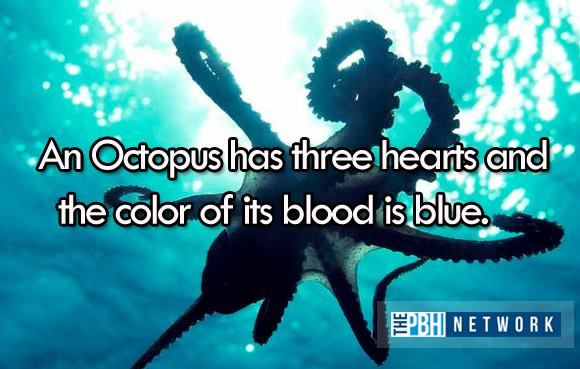 10 Amazing facts about ocean animals, amazing animals facts, ocean animal facts, octopus heart
