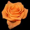 Lindas Flores Solitárias em Png e Gifs