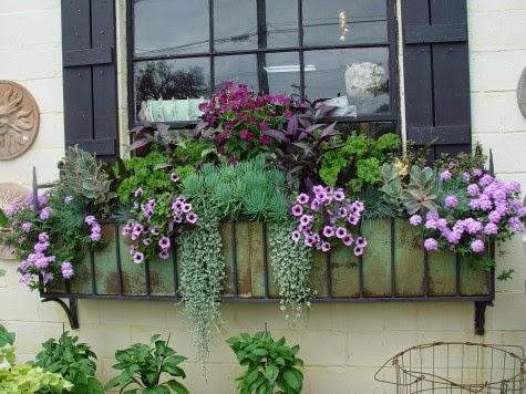 The Impatient Gardener: THE DEFINITIVE GUIDE TO WINDOW BOX DESIGN