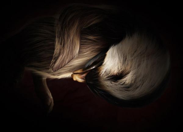 Impresionantes fotos de animales en el útero