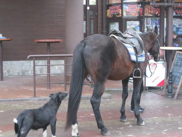 лошадь у киоска
