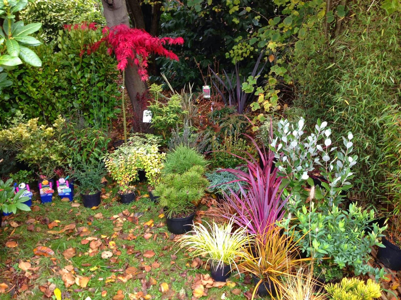 Plantes Coat Maen