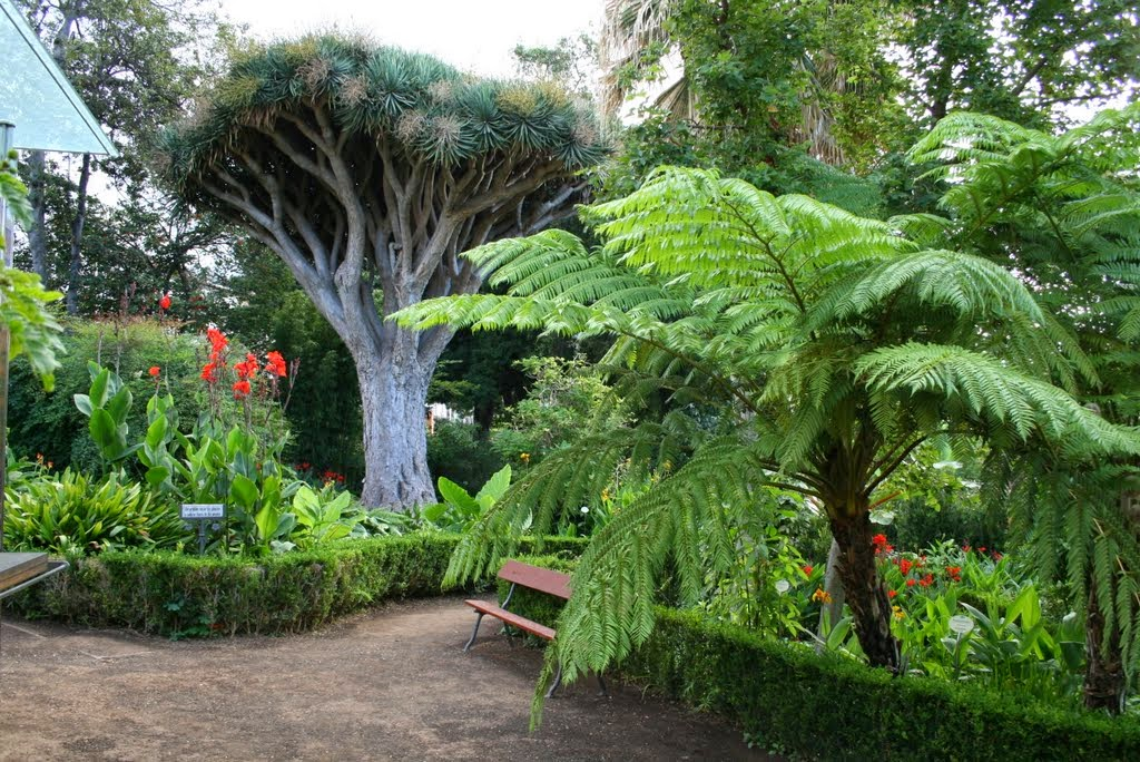 Tenerife la isla de la eterna primavera el blog de for America todo un inmenso jardin