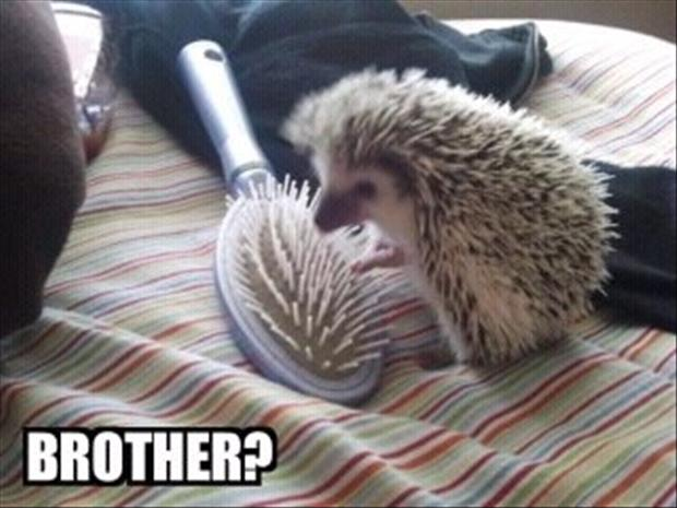 30 Funny animal captions - part 8, funny animal meme, animal pictures