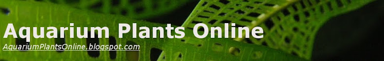 Aquarium Plants Online | Http://AquariumPlantsOnline.blogspot.sg/