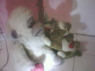 http://4.bp.blogspot.com/-xgXneLZCXgo/TdDgGb7srGI/AAAAAAAAAJ8/xj8UyfitrnY/s1600/ac4uag6m.jpg