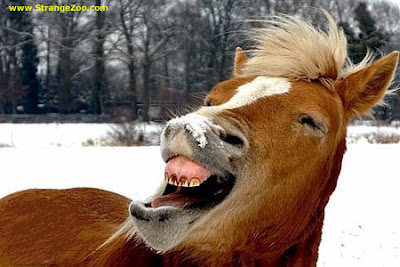 Cute Funny Horse Pictures