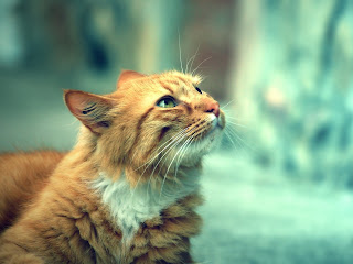 Orange Awesome Cat HD Wallpaper