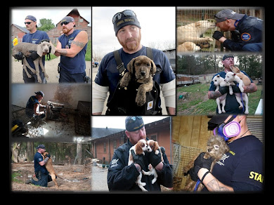 PUPPY MILL RAID ARKANSAS