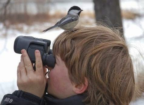 Feeding Backyard Birds In Winter And Celebrity Birders