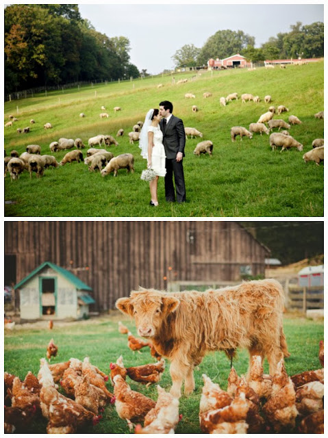 farm animals wedding