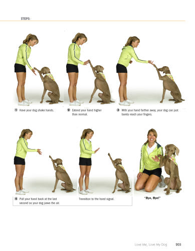 K Basic Dog Training
