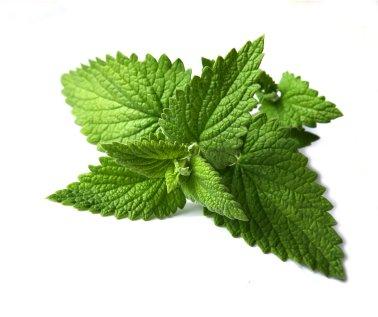 dieta de acido urico medicamentos para la gota naturales tratamiento para prevenir la gota