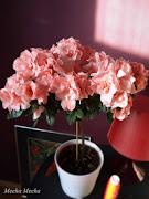 . caressing the delicate flowers of my pink azalea. (azalea light )