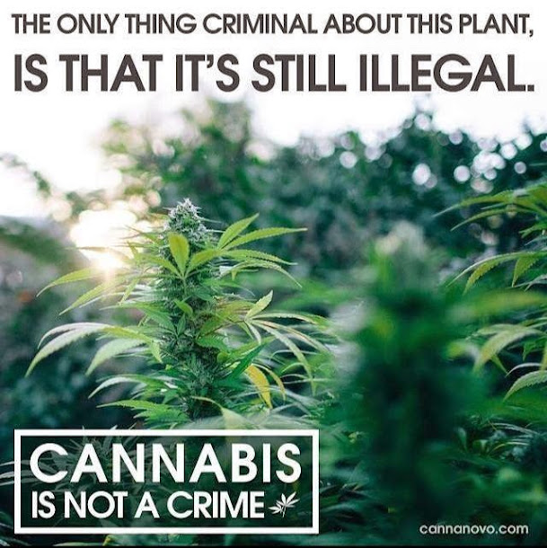 Smoking Marijuana is not a Crime |  Cannabis is not a Crime.