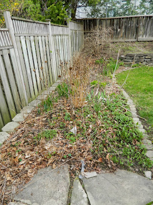 Spring garden cleanup Graydon before by Paul Jung Gardening Services Toronto