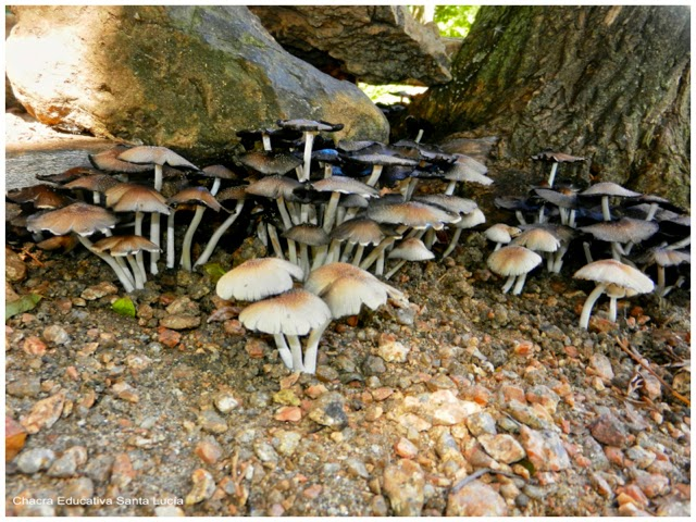 Rincones con hongos - Chacra Educativa Santa Lucía