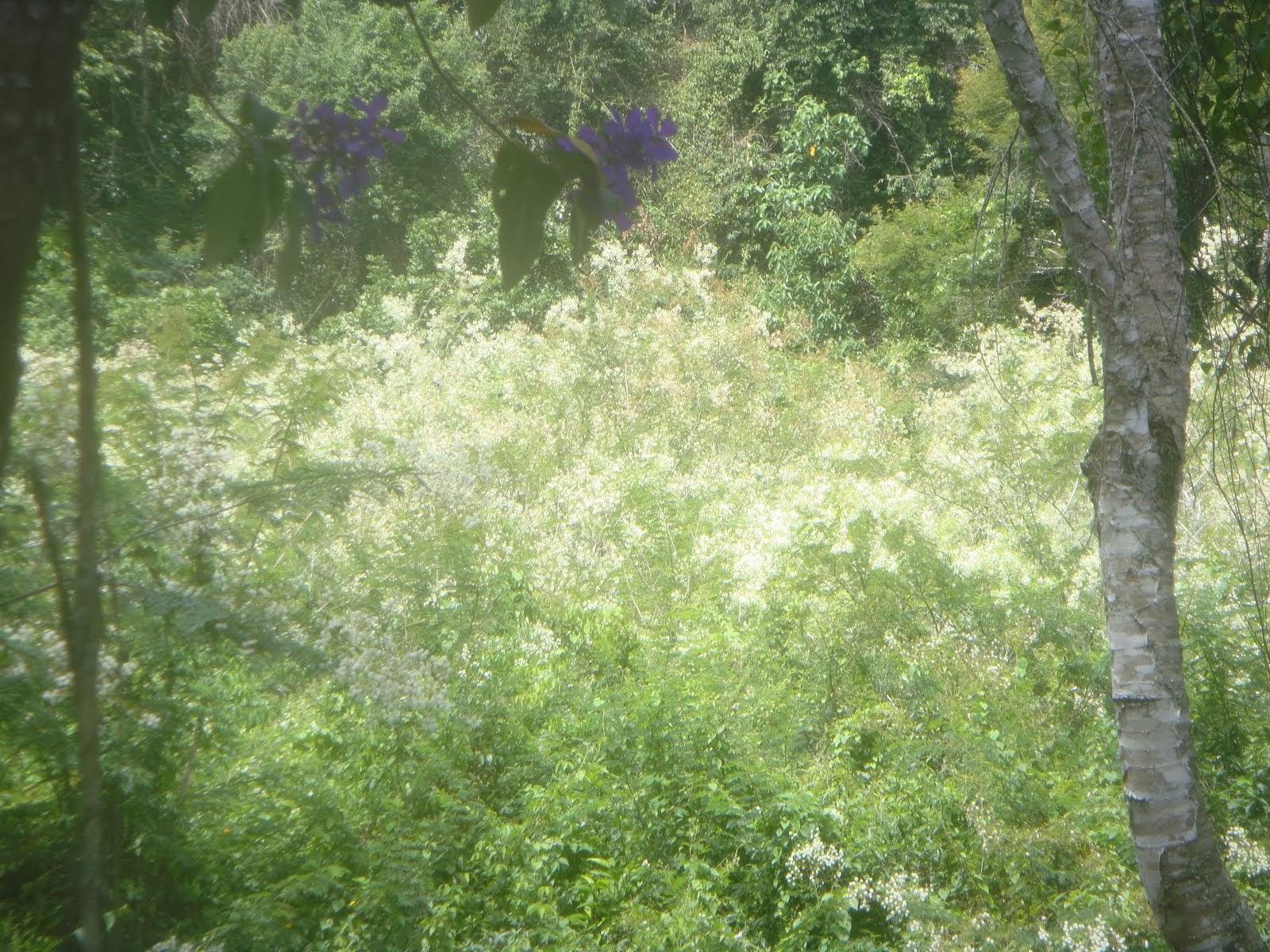 Flores do Maricá