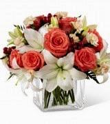 Blashuing Beauty flowers