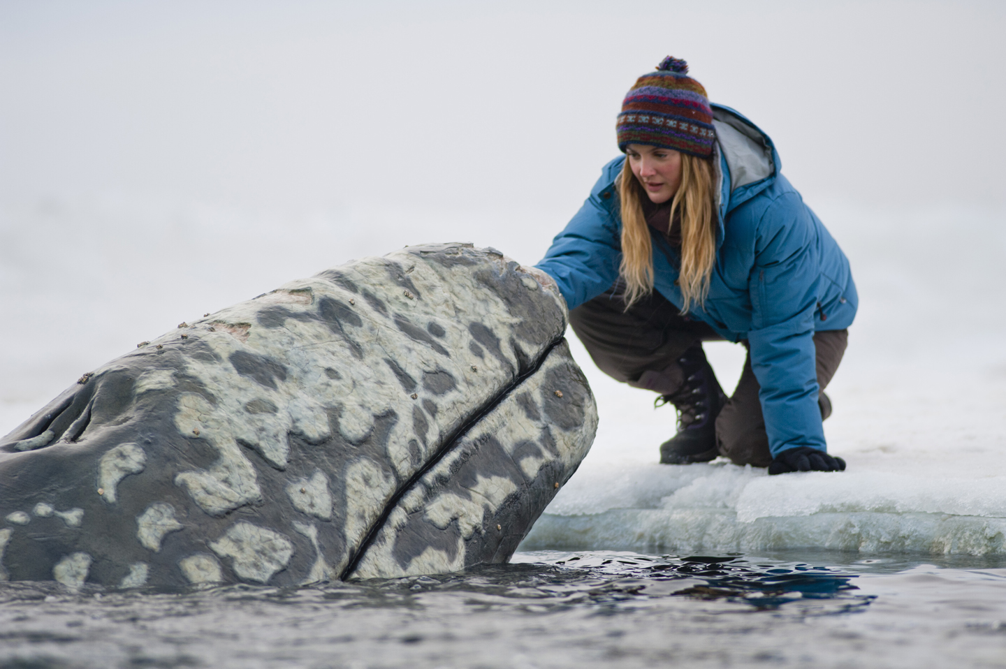 The big miracle review