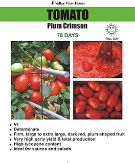 King Crimson - Plum Crimson tomatoes