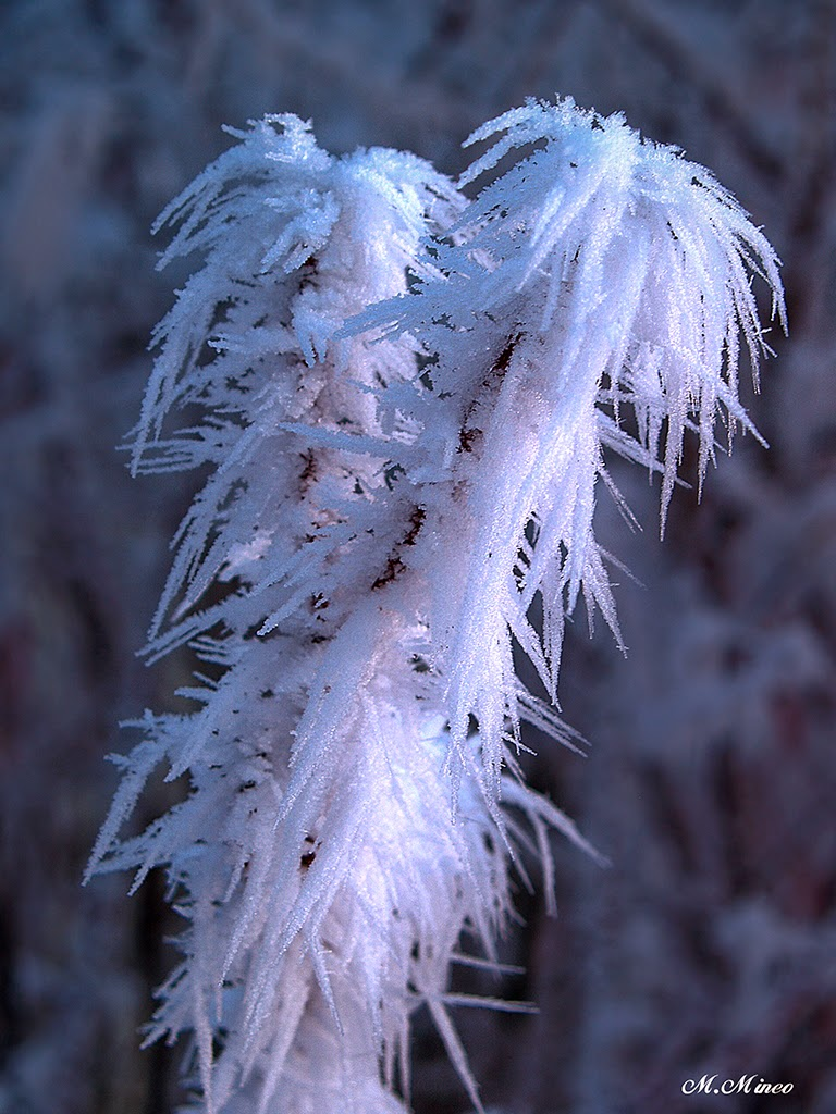 ice flower crystals