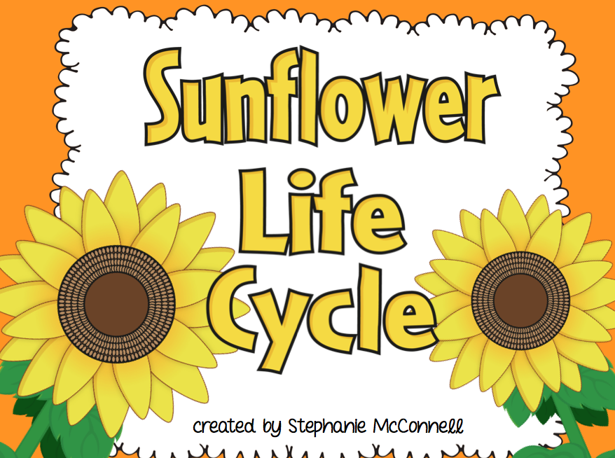 Sunflower Life Cycle Science Lesson on Parts Of A Seed Worksheet