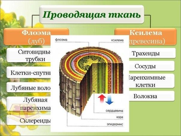 Плакаты и схемы по биологии
