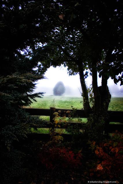 poranek, jesień, słońce, kolory jesieni, bajka, mgła
