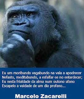 Meditabundo