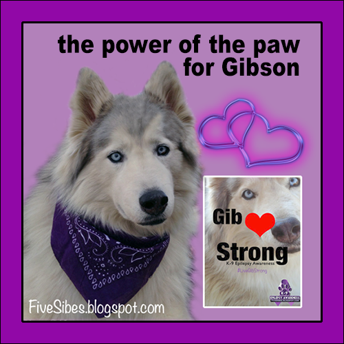 #Pawcircle of Prayers for Gibson